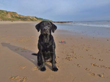 Astrid on Overstarnd Beach near Poppyland dog friendly Touring Caravan Park, Norfolk